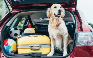 Dog In Boot With Interior Surface Coating